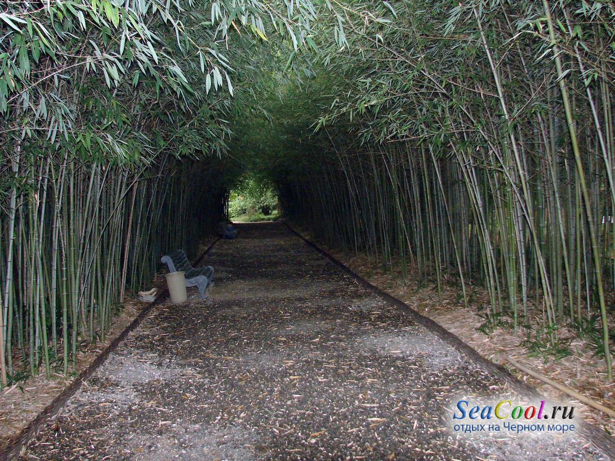 ботанический сад сухуми фото